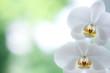 Fototapeten,orchidee,blume,blume,einladung
