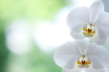 Orchideen-grußkarte