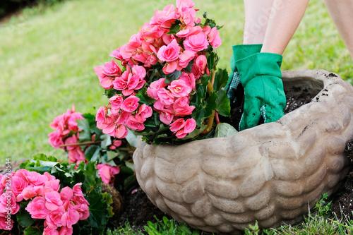 piantare fiori in un vaso - 23778544