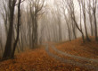 fog in a colorful forest in autumn