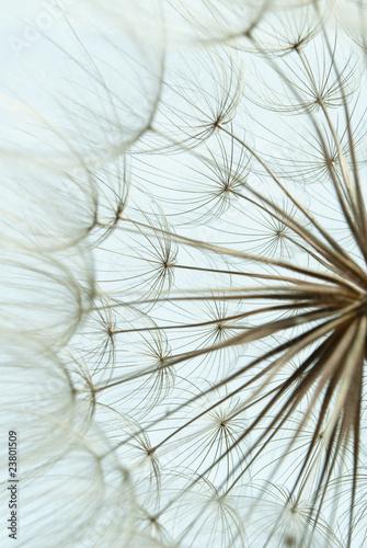 Keuken foto achterwand Paardebloemen en water Close-up of dandelion seed