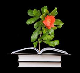 flower growing from an open book