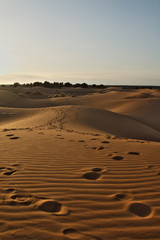 late afternoon on Sahara desert