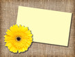 One yellow flower with message-card