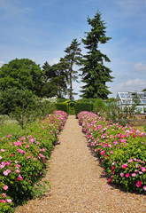 Formal English Garden with Flower strewn Path
