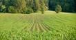 Feld mit Wald im Hintergrund