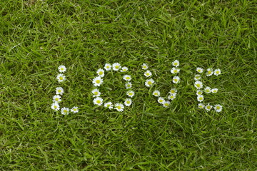 Description love made of daisies on green grass