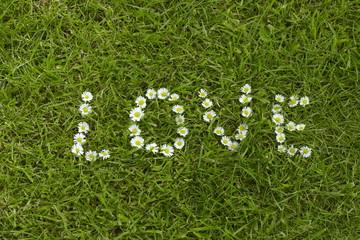 Description love made of daisies on green grass