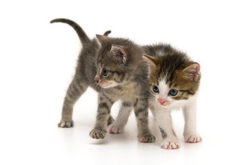 Two Baby Cats