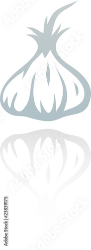 line art garlic isolated on white