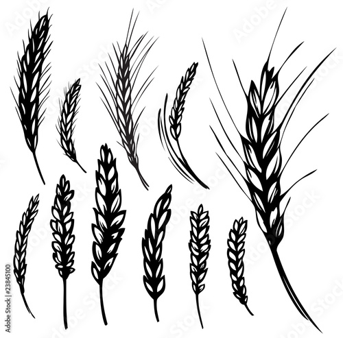 Rye, wheat - 23845100