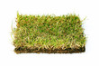 Turf on white background