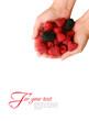 Кaspberries and blackberries on palms