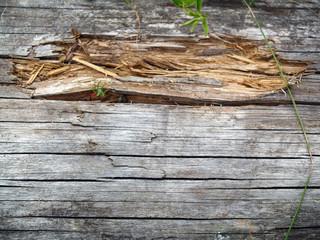 Holzspäne 3