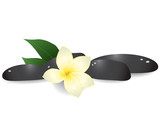Vector illustration of black pebbles and frangipani