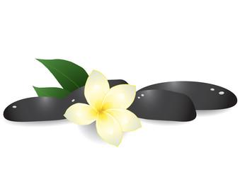 Vector illustration of black pebbles and frangipani
