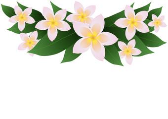 Vector illustration of frangipani plumeria border