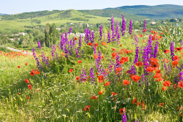 Beautiful summer country landscape with flowers .