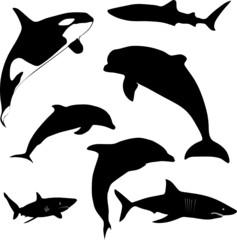 sea mammals and sharks