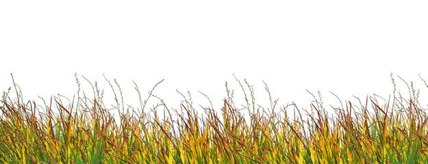 Herbe colorée détourée