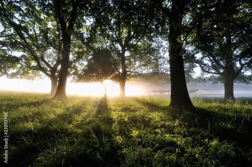 Forest © keller
