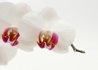 Wellness Blume