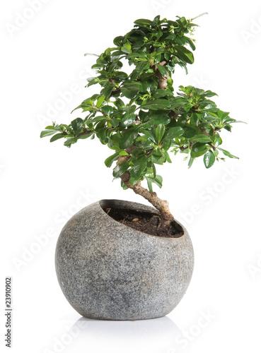 Tuinposter Bonsai bonzai zen