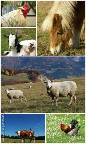animaux de ferme