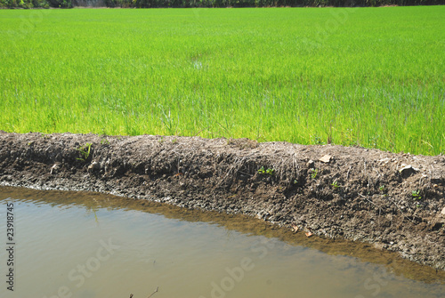 rice irrigation