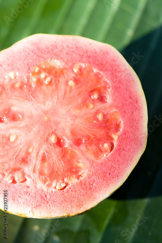 Pink guava on green