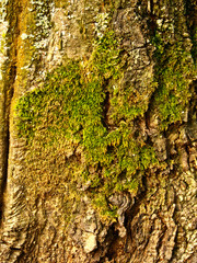 Thick green moss
