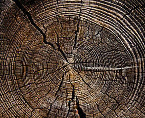 Wooden surface of a board. Old Tree Stump.