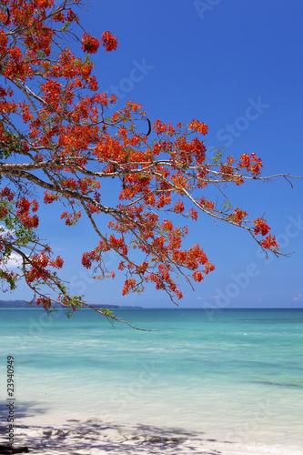 czerwony-kwiatu-drzewo-wiesza-nad-blekitnym-morzem