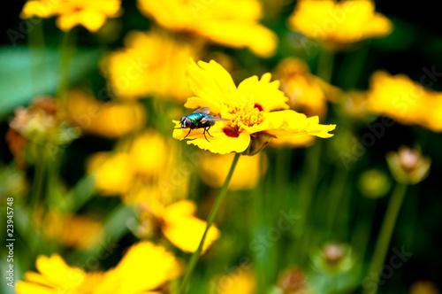 Mouche sur une fleur Poster