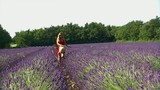 jeune fille qui se promène dans un champs de lavande poster