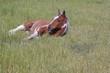 Fototapeten,equus,grün,pferd,uhr