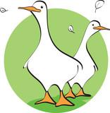 Fototapety oca duck