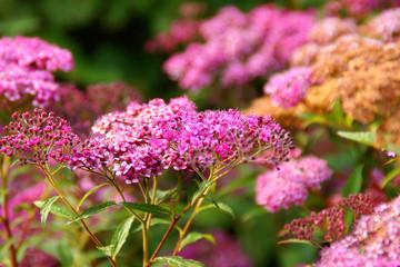 flower #130