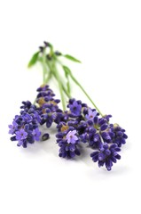 Provence, Symbol