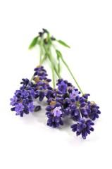 Duft, Lavendel