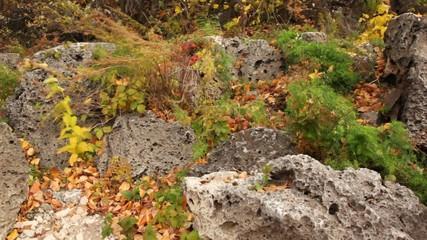 plants growing among porous stones