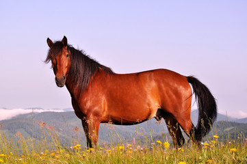 Beautiful brown horse in the mountains upon blue sky background