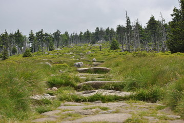 steps to the mountain with forest
