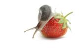 Slug-worm poster