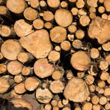 woodpile - outdoor in nature at autumn poster