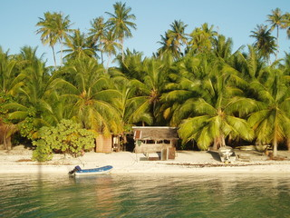 Rangiroa-Palmiers-Plage