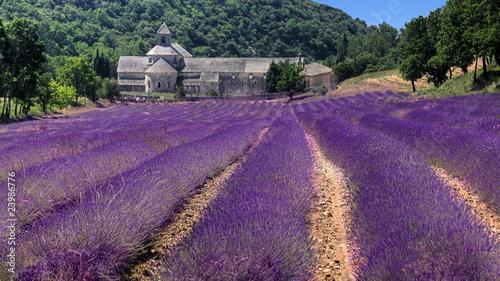 France - Paca - Abbaye de Senanque