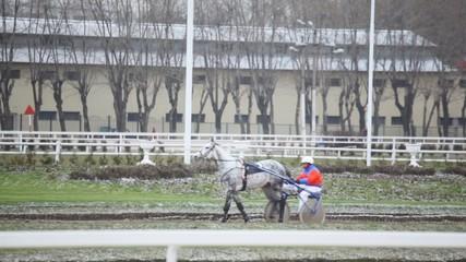 spotty race horse with cart and jockey on hippodrome
