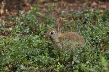 Cute bunny rabbit in undergrowth
