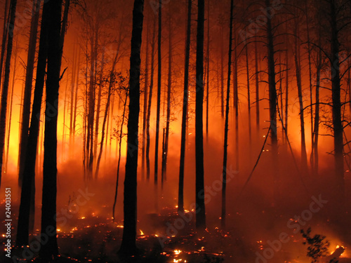 Forest fire - 24003551